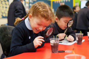 Students using magnifying glasses to look at plants at St Michael's Catholic Primary School Daceyville